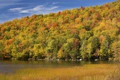 Follaje de otoño llamativo en la ladera, Russell Pond, Lincoln, nueva ha Foto de archivo libre de regalías