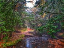 Follaje de otoño a lo largo de la pista de senderismo fotografía de archivo libre de regalías