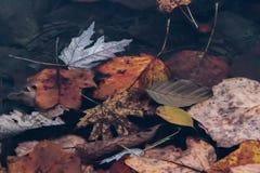Follaje de otoño que ha caído en un lago Foto de archivo
