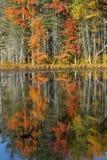 Follaje de otoño reflejado en agua en Quincy Bog Imagen de archivo libre de regalías