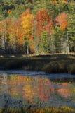 Follaje de otoño reflejado en agua en Quincy Bog Foto de archivo libre de regalías