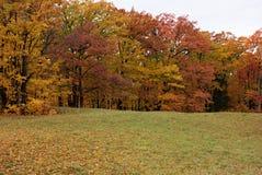 Follaje de otoño V de Vermont Imagenes de archivo