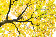 Follaje de otoño vibrante foto de archivo