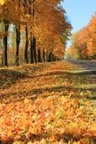 Follaje de otoño y camino cinco imagen de archivo libre de regalías