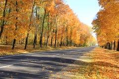 Follaje de otoño y camino seis foto de archivo libre de regalías
