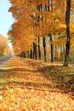 Follaje de otoño y camino tres fotos de archivo