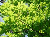 Árboles en tiempo de primavera Imagenes de archivo