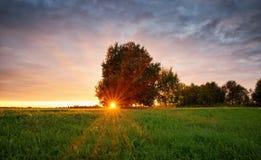 Follaje del árbol en luz de la mañana Imagen de archivo libre de regalías