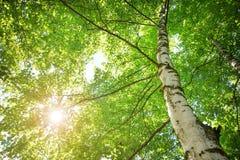 Follaje del árbol en luz de la mañana Imagen de archivo
