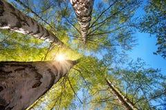 Follaje del árbol en luz de la mañana Fotografía de archivo
