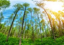Follaje del árbol en luz de la mañana Imagenes de archivo