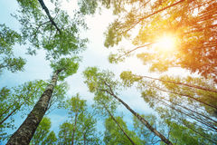 Follaje del árbol en luz de la mañana Fotos de archivo