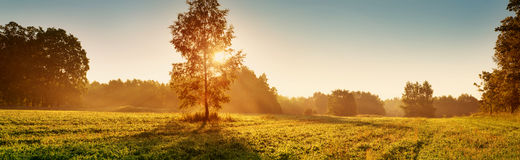 Follaje del árbol en luz de la mañana Foto de archivo