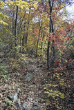 Follaje del otoño fotografía de archivo