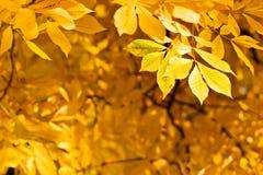 Follaje del otoño Imágenes de archivo libres de regalías