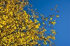 Follaje del otoño Fotos de archivo