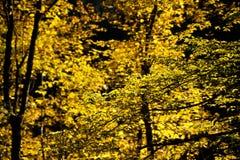 Follaje del otoño Fotos de archivo libres de regalías