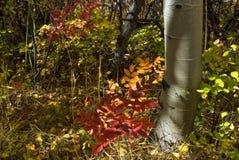 Follaje del otoño Imagen de archivo libre de regalías