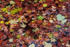 Follaje del otoño Foto de archivo libre de regalías