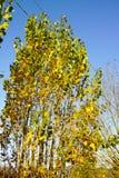 follaje del otoño en appennino italiano Imagen de archivo