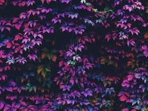 Follaje del otoño en el bosque Foto de archivo libre de regalías