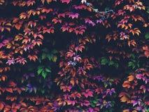 Follaje del otoño en el bosque Fotografía de archivo