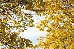 Follaje del otoño en el día asoleado Imágenes de archivo libres de regalías