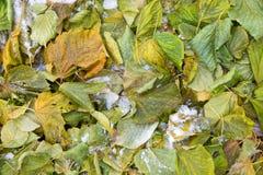 Follaje del otoño en la tierra Imagen de archivo libre de regalías