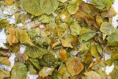 Follaje del otoño en la tierra Fotos de archivo libres de regalías