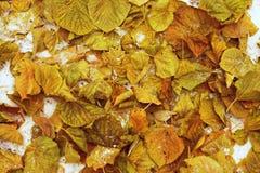 Follaje del otoño en la tierra Imagen de archivo