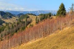 Follaje del otoño en las montañas Fotografía de archivo