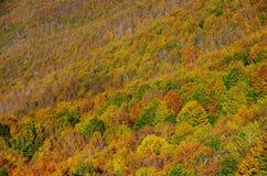 Follaje del otoño en Toscana, Italia Fotografía de archivo