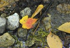 Follaje del otoño en un bosque de nordeste Imagen de archivo