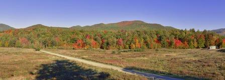 Follaje del otoño en un bosque de nordeste Fotografía de archivo libre de regalías