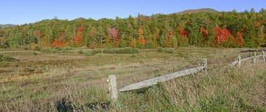 Follaje del otoño en un bosque de nordeste Foto de archivo