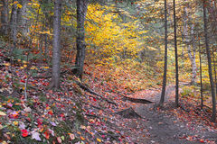 Follaje del otoño en un bosque de nordeste Fotografía de archivo