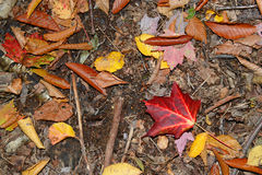 Follaje del otoño en un bosque de nordeste Imagen de archivo libre de regalías