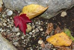 Follaje del otoño en un bosque de nordeste Fotos de archivo libres de regalías