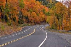 Follaje del otoño en un bosque de nordeste Imágenes de archivo libres de regalías
