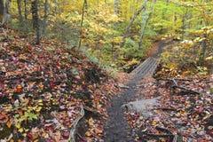 Follaje del otoño en un bosque de nordeste Foto de archivo libre de regalías