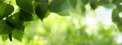 Follaje del verano después de la lluvia Foto de archivo libre de regalías