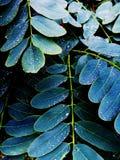 Follaje empapado lluvia Foto de archivo libre de regalías