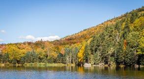 Follaje en las montañas blancas bosque del Estado, New Hampshire, los E.E.U.U. Imagen de archivo libre de regalías