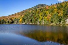 Follaje en las montañas blancas bosque del Estado, New Hampshire, los E.E.U.U. Imagen de archivo