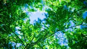 Follaje en viento Imagenes de archivo