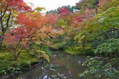 Follaje enorme del árbol de arce japonés durante otoño en un jardín en Kyoto, Japón Fotos de archivo