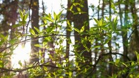 Follaje fresco y el sol almacen de metraje de vídeo