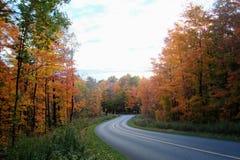 Follaje hermoso del otoño que mira a través de los árboles de abedul un la foto de archivo libre de regalías