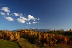 Follaje hermoso del paisaje y del otoño de la montaña Foto de archivo