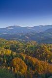 Follaje hermoso del paisaje y del otoño de la montaña Foto de archivo libre de regalías